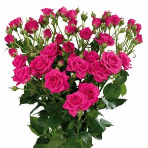 Interplant Roses  29 3 07
