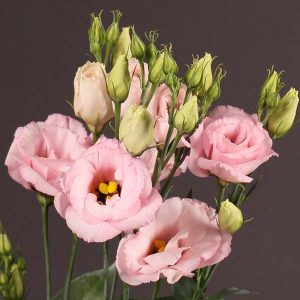 lisianthus_light_pink