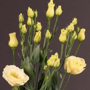 lisianthus_yellow