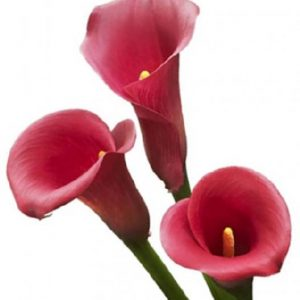 mini_calla_raspberry