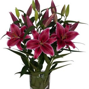 oriental_lily_hot_pink